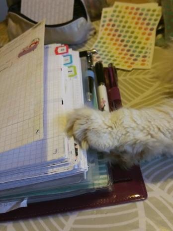 cat2band2bfilofax